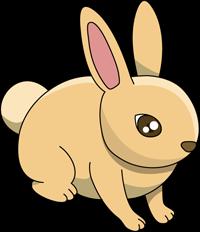 img_rabbit002